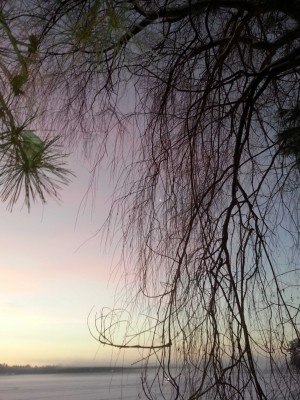 Pine needles against a winter sky offer a glimpse of green
